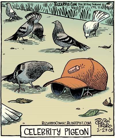 Bizarro - Celebrity Pigeon
